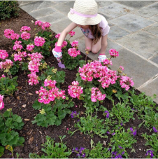 Children Tending Pink Flowers In Dallas