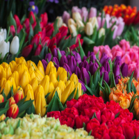 Dallas Flowers In Bloom