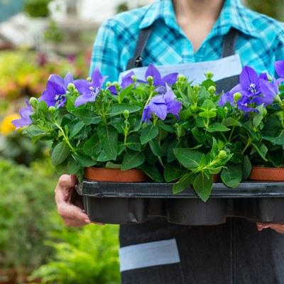 Organic garden dallas