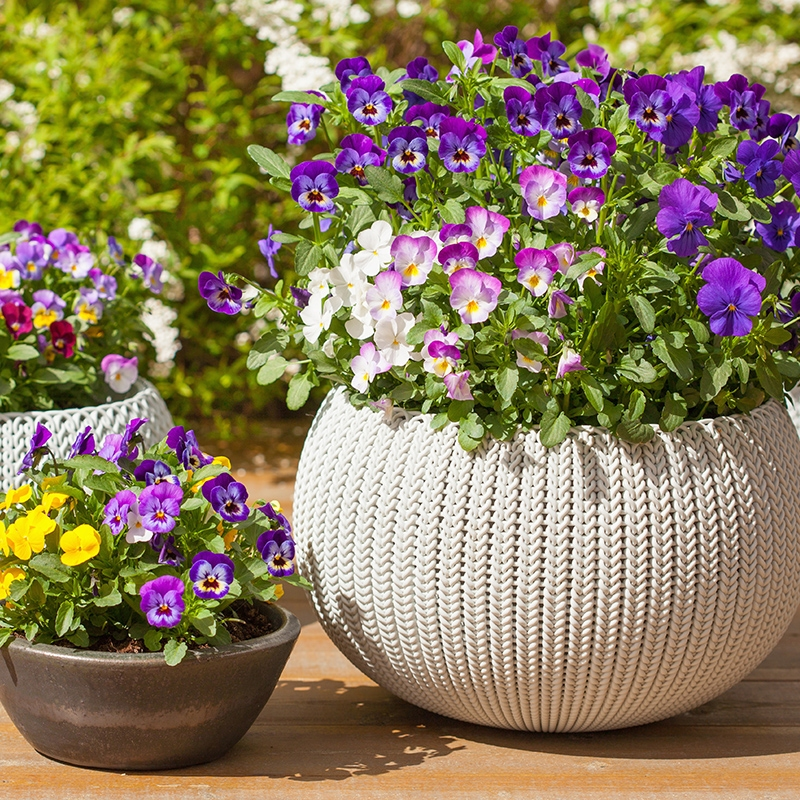 Texas Patio Container Gardening