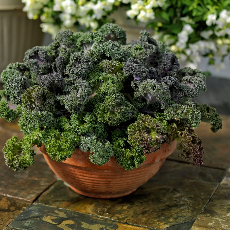 Kale red bor